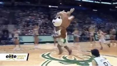Enlace a Ya tardan en hacer una liga profesional de mascotas