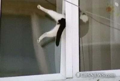 Enlace a Ciudadano anónimo ayudando a un gato atrapado entre dos ventanas