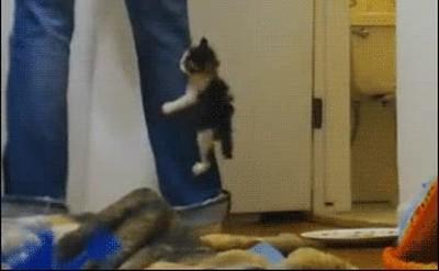Enlace a Gatos demasiado encariñados con su dueño
