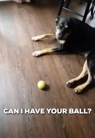 Enlace a Lo que pasa cuando le pides educadamente a tu perro si te presta su pelota