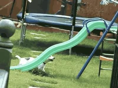 Enlace a Perro listo que no necesita ningún humano para pasárselo bien