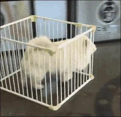 Enlace a Si Prison Break estuviese protagonizada por un perro