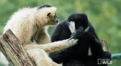 Enlace a No es amor hasta que le limpias las manos con la boca