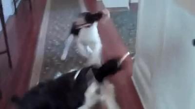 Enlace a La reacción de tus perros cuando les preguntas si quieren salir a dar una vuelta