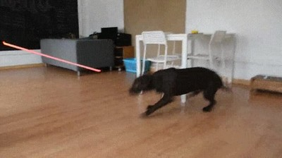 Enlace a La reacción de un buen perro cuando conoce el Lado Oscuro de la fuerza