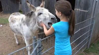 Enlace a Este burro está muy contento de ver a su amiga