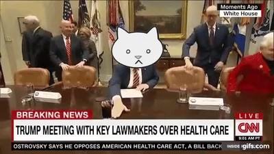 Enlace a El presidente Trump es en realidad un gato con muchas manías
