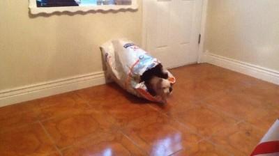 Enlace a Así nacen todos los perros
