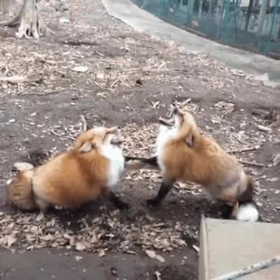 Enlace a Firefox ha encontrado un problema y debe cerrarse