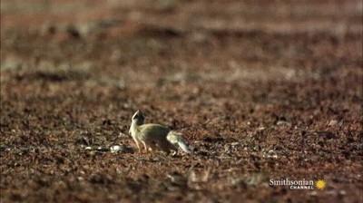 Enlace a Cómo esquivar el ataque de una cobra en el último segundo