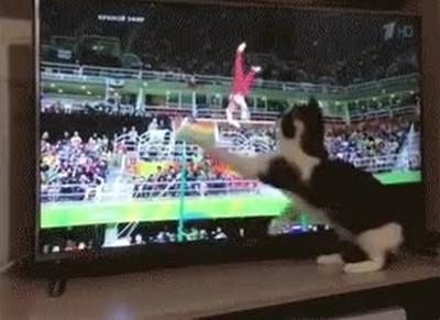 Enlace a Gato intentando echar una mano a un gimnasta
