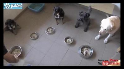 Enlace a La disciplina de estos perros es realmente increíble