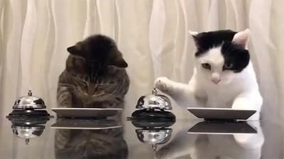 Enlace a ¡Comida! ¡Por favor!