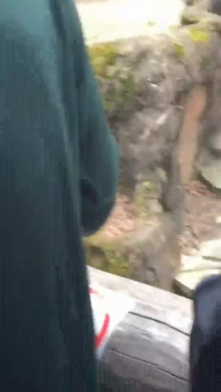 Enlace a Un chimpancé ataca a unos visitantes con sus heces y le da en la cara a una abuela