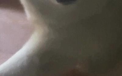 Enlace a La cara de felicidad de este perro es impagable