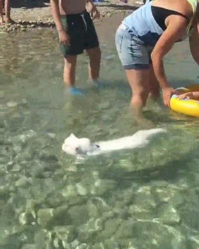Enlace a Gatos que nadan con más estilo que muchos de nosotros
