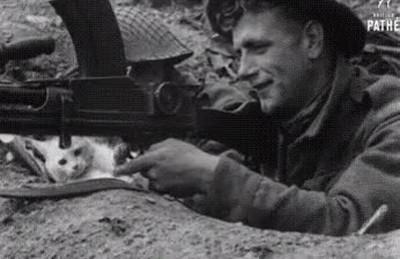 Enlace a Gatos pacifistas que detestan que los hombres se maten unos a otros