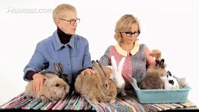 Enlace a Discutiendo sobre cuál es la mejor raza de conejo