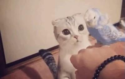 Enlace a Esta es Hana, una gata japonesa con unos ojos enormes