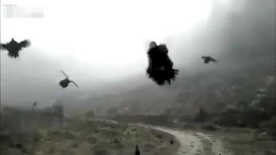 Enlace a ¿Quién decía que las gallinas no pueden volar?