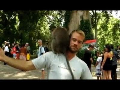 Enlace a ¿Te acuerdas el día en que dos monos tuvieron un momento de pasión sobre tu cabeza?