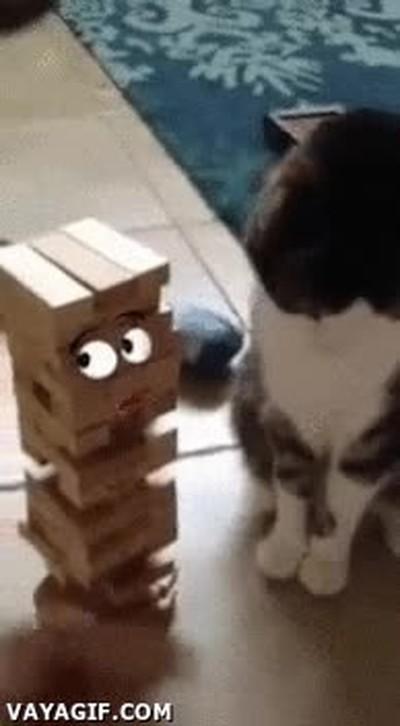 Enlace a Gatos que no tienen en cuenta los sentimientos de los demás