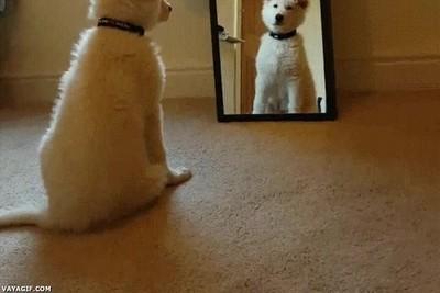 Enlace a La reacción de un perro cuando se ve por primera vez reflejado en un espejo