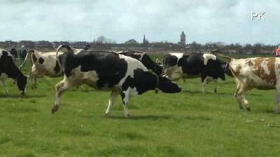 Enlace a Lo que hacen las vacas cuando por primera vez en 5 meses salen al mundo exterior