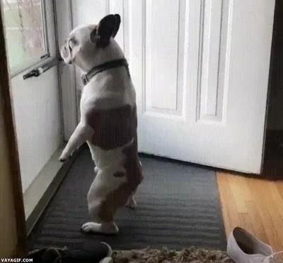 Enlace a Perros que han aprendido a comportarse como humanos
