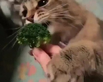 Enlace a La cara que se te queda cuando empiezas la dieta y tienes que comer brócoli