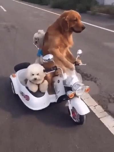 Enlace a Cuando tu perro decide salir a pasar un finde loco con los amigos