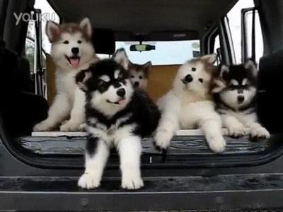 Enlace a Cachorros bastante confundidos