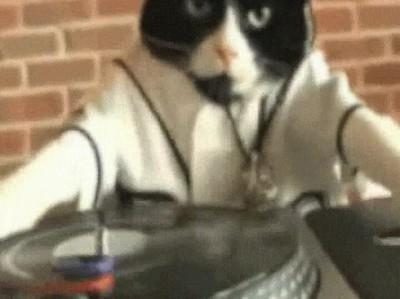 Enlace a Admítelo. NUNCA molarás tanto como este gato DJ