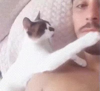 Enlace a Gatos que exigen un beso de buenos días por las mañanas