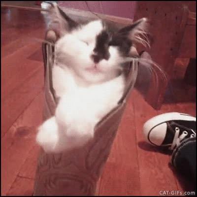 Enlace a Cuando tu gato encuentra el mejor sitio para dormir de toda la casa