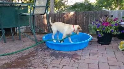 Enlace a Cuando tu perro decide que es hora de llenar la piscina