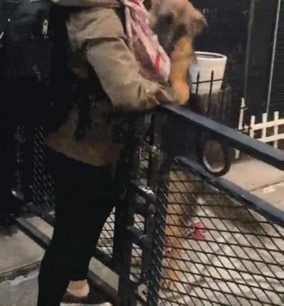Enlace a Nadie se alegrará tanto de que hayas llegado a casa como tu perro