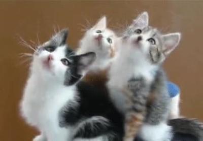 Enlace a Gatos mirando un partido de tenis