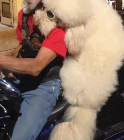 Enlace a Perros que se parecen a sus dueños. ¿O es al revés?