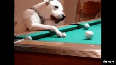 Enlace a Perros jugando a billar