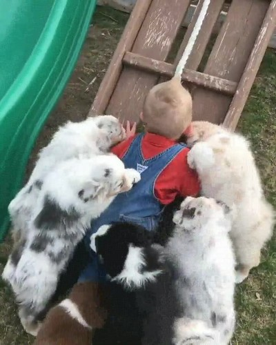 Enlace a El ataque de los perros besucones
