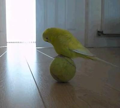 Enlace a Haciendo malabares encima de una pelota de tenis