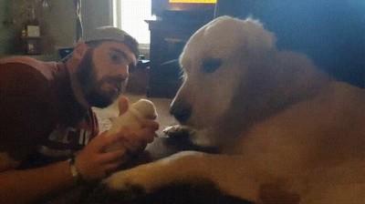 Enlace a Perros que no están preparados para ser padres