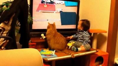 Enlace a Gato y bebé humano enganchados a lo que ocurren en televisión