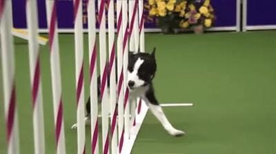 Enlace a Perros superando pruebas a cámara lenta. Hipnotizante