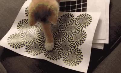 Enlace a Gatos muy rallados con las ilusiones ópticas