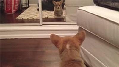 Enlace a Perros que se ven reflejados en el espejo y se quedan MUY PILLADOS