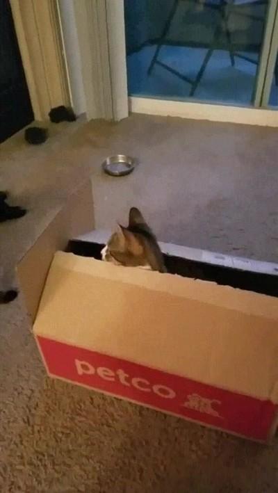 Enlace a Gato posesivo que no deja acercarse a nadie a su caja