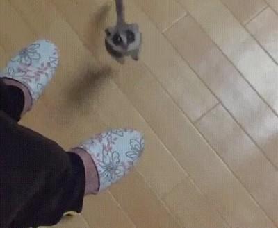Enlace a Lémur que digievoluciona en cohete para despegar