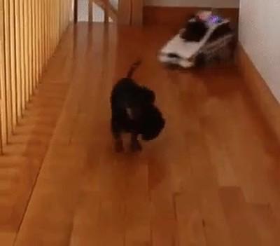 Enlace a La verdadera patrulla canina